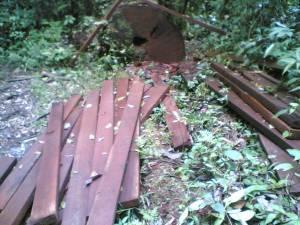 penebangan hutan