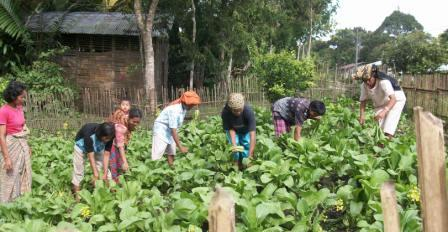 Petani Sayur-Mayur Kuta Ujung. Kegiatan pertanian masyarakat Pakpak Bharat pada dua tahun terakhir dirasakan mulai bergairah. Seperti terlihat pada gambar kegairahan para petani sayur-mayur di Desa Kuta Ujung Kecamatan Sitellu Tali Urang Julu Pakpak Bharat saat melakukan panen bersama. Diharapkan kepada Pemerintah Kabupaten Pakpak Bharat melalui Dinas Pertanian dapat lebih memperioritaskan pembinaan dan pemberian bantuan bagi para petani yang benar-benar memiliki lahan dan orientasi pertanian yang riil serta memiliki aspek-aspek kedepan. (Minggu, 17/01).
