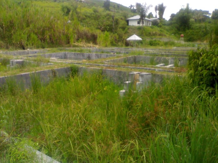 Fasilitas pengembangan benih ikan BBI di Desa Cikaok Kecamatan STTU JULU Pakpak Bharat terlihat berubah fungsi menjadi lokasi berkembangnya semak belukar. @