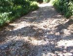 Beginilah kondisi jalan Lae Merempat Desa Malum Kecamatan Sitellu Tali Urang Jehe (STTU JEHE) Kabupaten Pakpak Bharat. @